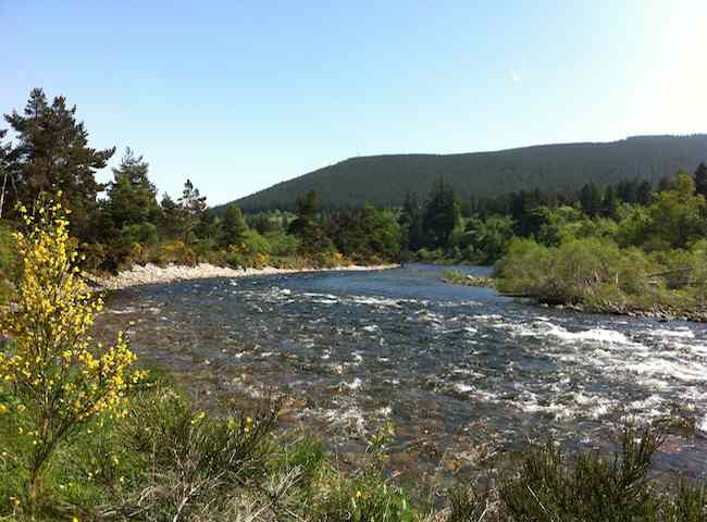 Here's a look at the perfect River Dee In Early June Near Ballater